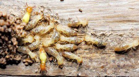 termitas-en-talavera-blog-sixsa