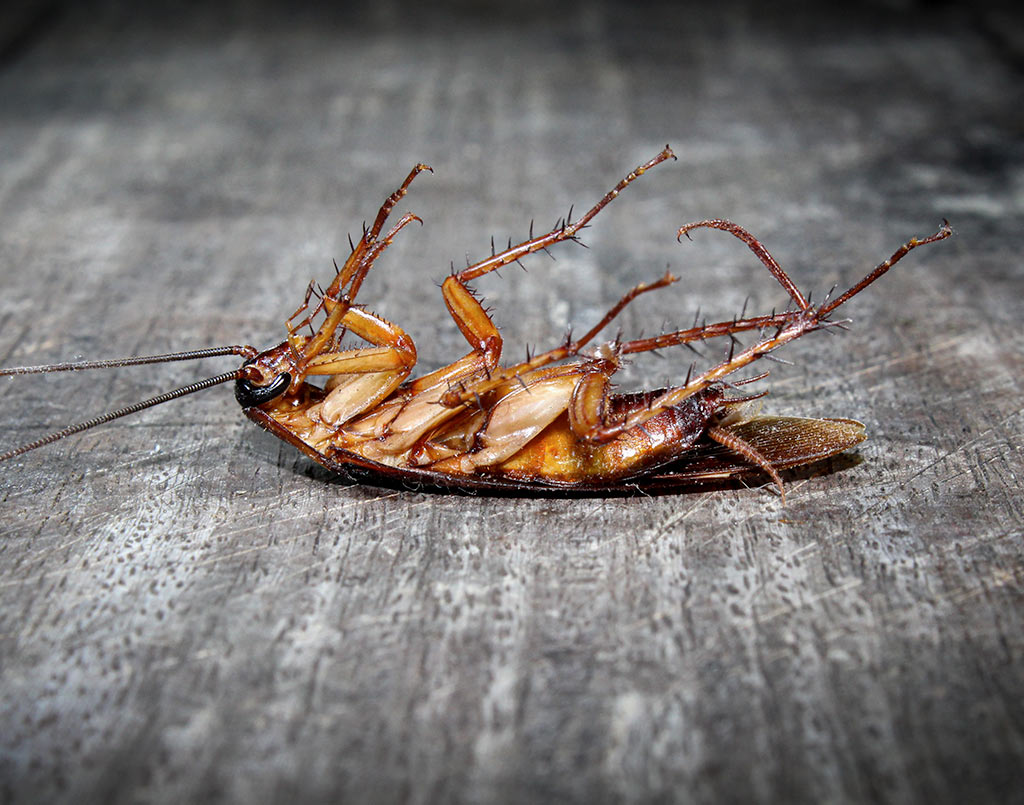 plaga-cucaracha5-sixsa