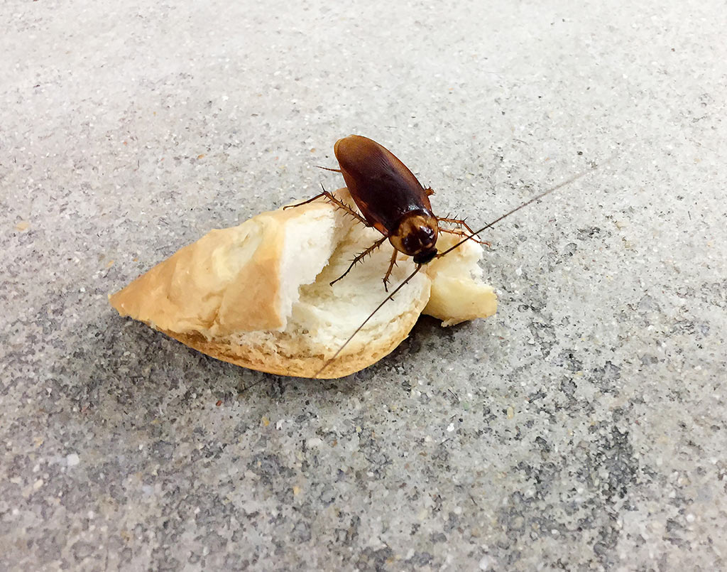 plaga-cucaracha6-sixsa