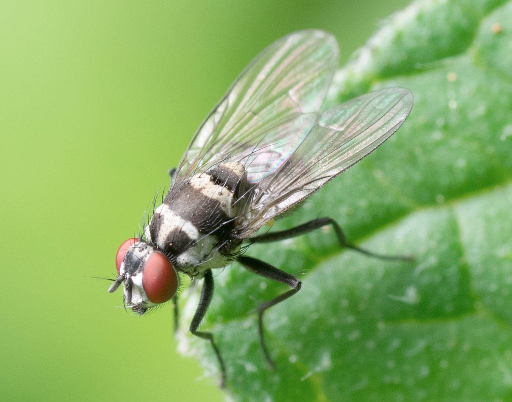 plagas-moscas-sixsa