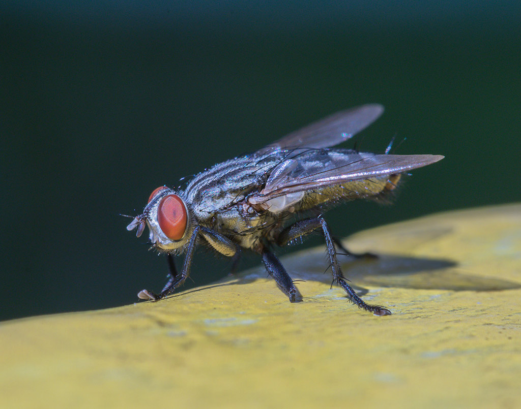 plaga-moscas2-sixsa