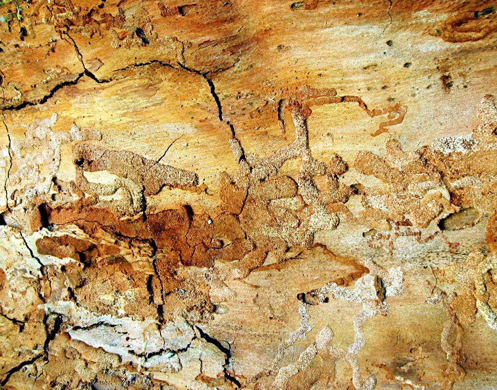plaga-termitas3-sixsa