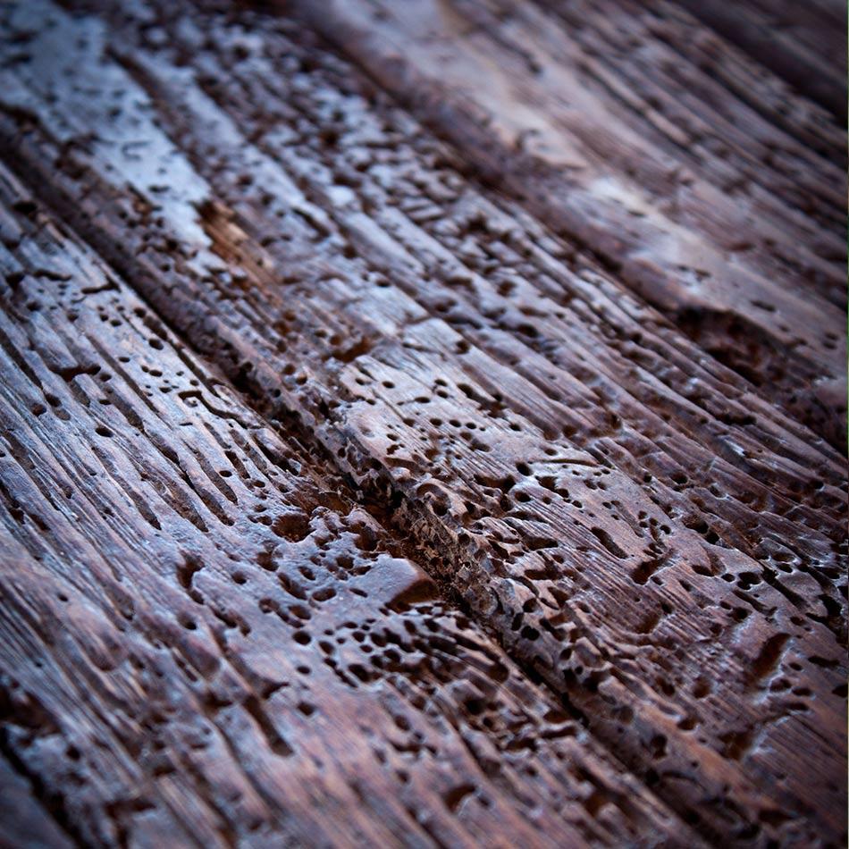 plaga-termitas-4-sixsa