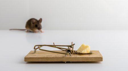 controlplagas-ratones-terminarconlosratones-sixsa-seguridadambiental-fumigador-profesional-experto-talavera